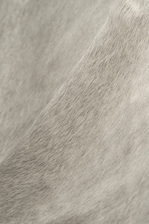 WILD cowhide natural on light grey zoom